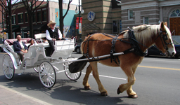Carriage ride in uptown charlotte -- fourth ward 4th ward historic tours